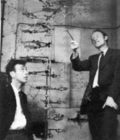 the discovery and understanding of the structure of dna by james watson and francis crick James watson and francis crick francis harry compton crick was born on they published the news of their discovery, a molecular structure of dna based on.